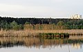 Svyatoshyn ponds2.JPG