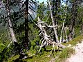Swiss National Park 103.JPG