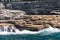 Sydney (AU), Coast, New Zealand sea lions -- 2019 -- 3484.jpg