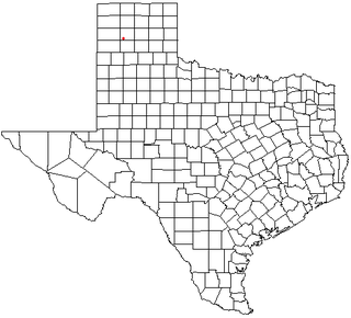 Bushland, Texas human settlement in Texas, United States of America