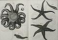 Tableau encyclopédique et méthodique des trois règnes de la nature (1791) (14745142736).jpg