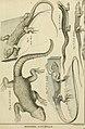Tableau encyclopédique et méthodique des trois règnes de la nature - dédié et présenté a M. Necker, ministre d'État, and directeur général des Finances (1789) (14802289643).jpg