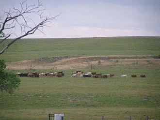 Tallgrass Prairie National Preserve - Image: Tallgrass Prairie P5300398