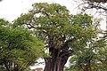Tarangire 2012 05 27 1902 (7468514314).jpg