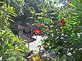 Temple de Goa Gajah - panoramio.jpg