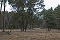 Teverener Heide 2.jpg