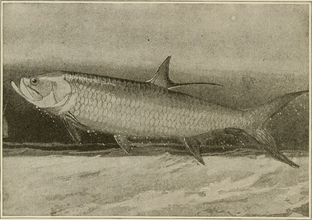 Image result for painting of salmon of knowledge