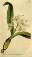 The Botanical Magazine, Plate 152 (Volume 5, 1792).png