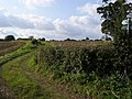 The Chiltern Way - geograph.org.uk - 965944.jpg