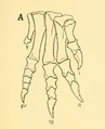 The Osteology of the Reptiles-209 dfg ghj.png