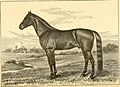 The breeds of live stock, and the principles of heredity (1887) (14594400820).jpg