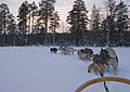 The view from the sledge ) (5296604023).jpg