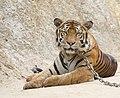 Tiger Temple (6032441172).jpg