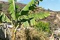 Tixtla view - panoramio (1).jpg