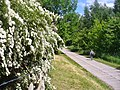 Toeplitz - Wanderweg (Footpath) - geo.hlipp.de - 36874.jpg