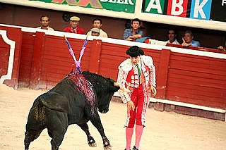 Bullfighting Spectacle of bulls fought by humans
