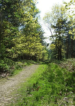 Track to Harley Thorns - geograph.org.uk - 1306635
