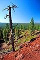 Tree Snag (Deschutes County, Oregon scenic images) (desDA0087a).jpg