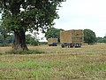 Tree and trailer - geograph.org.uk - 955124.jpg
