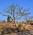 Tree on rocks (1).JPG