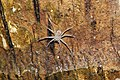 Tree trunk spider 6172.jpg
