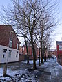 Trees on Town Road, Tranmere.JPG