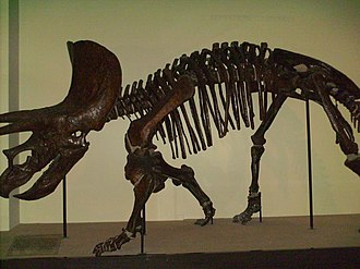Goulandris Natural History Museum - Triceratops dinosaur skeleton at Goulandris Museum of Natural History in Kifissia, Athens, Greece