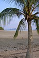 Tropical palm tree on the beach of Koh Yao Noi island at sunset time, Thailand.jpg