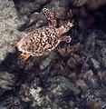 Turtle 1 (4385134301).jpg