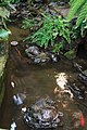 Turtles (32048681801).jpg