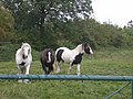 Two horses with but a single thought - geograph.org.uk - 554622.jpg