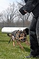 USAF military working dog.JPG