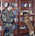 US Navy 060208-N-3390M-003 U.S. Navy dog handler, Master-at-Arms 2nd Class Mathew Tarlton, assigned to Military Working Dog Kennel Naval Station Everett.jpg