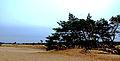 Uitzicht over de Loonse en Drunense Duinen met boom.jpg