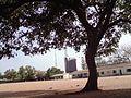 Under my cold shade. i see sharp tall.jpg