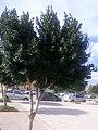 Une arbre.jpg
