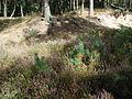 Unterholz-und-Heide-Wacholderhain-Haseluenne.jpg