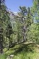 Vadret da Morteratsch - panoramio (2).jpg