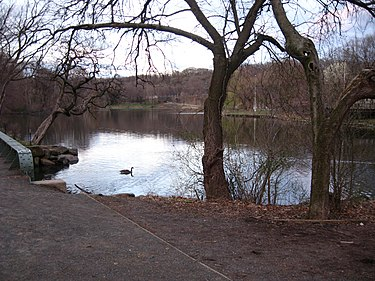 The lake within Van Cortlandt Park, at the south end of the brook Van Cortlandt Park lake east jeh.jpg