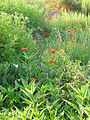Verge flowers.JPG