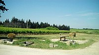 Vignoble de Campuget.jpg