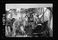 Vintage activities at Richon-le-Zion, Aug. 1939. Dumping grapes into the hopper for crushing LOC matpc.19779.jpg