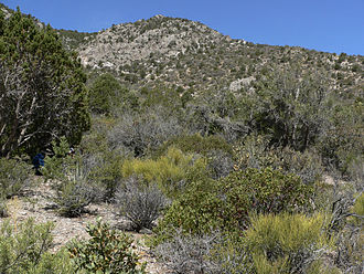 Great Basin Desert - Sagebrush in the Virgin Mountains, Nevada