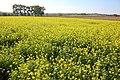 Vlaamse Ardennen 11.jpg
