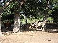 Wagon Wheel Ranch-2.jpg