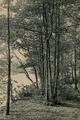 Walden Woods.png