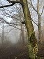 Waldweg im Morgennebel.jpg