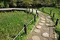 Walkway - Institute for Nature Study, Tokyo - DSC02128.JPG