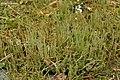 Wand Lichen (4504564062).jpg