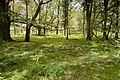 Warwickslade Cutting, original stream bed, Vinney Ridge part (start of sequence) - geograph.org.uk - 1546496.jpg